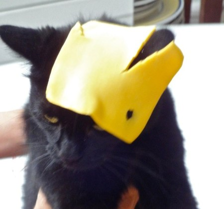 Cat Cheese Head